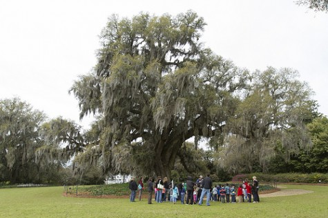 Airlie Gardens' massive live oaks are among attractions free to county residents the first Sunday of each month for New Hanover County Family Fun Days. This month's free day is tomorrow, July 7. Photo courtesy New Hanover County.