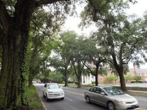 Commuters beneath the branches of the aging oak trees on Market Street in Wilmington. File photo by Ben Brown.