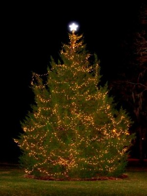 Greenfield Lake Christmas Tree. Photo courtesy of the City of Wilmington.