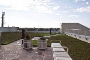 Green roof at 320 Chestnut St. Photo by Hannah Leyva.