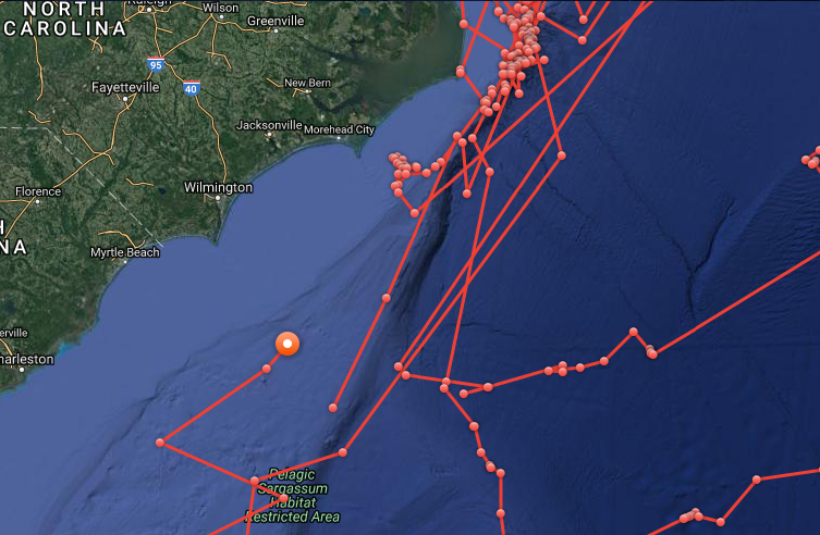 Mary Lee Has Come The Closest Cape Fear Coast In Last Year Photo Is Taken From An Interactive Tracking Map Generated By OCEARCH
