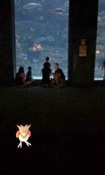 A Pokeman Go screenshot captured inside the Fort Fisher Aquarium at Kure Beach.