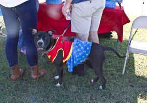 A dog dressed up like Wonder Woman during the 7th Annual Salty Paws Festival in 2015. Photo by Hannah Leyva.