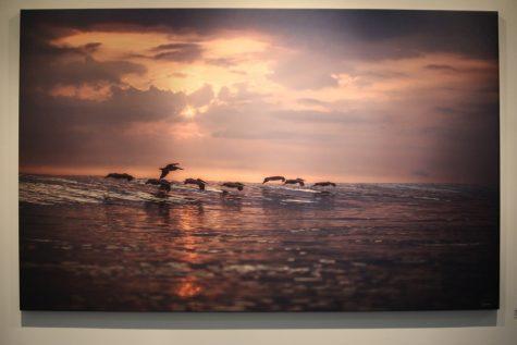"Sean Rutkay ""Pelicans in Phalanx"" weatherproof print on aluminum, 2016"