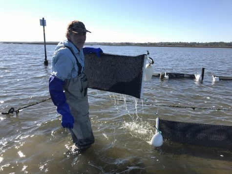 Holbrook with a bag attached to a Lentz system. The technique holds the oysters out of the water during low ides, killing sponges and other pests that can damage the oysters. (Photo Benjamin Schachtman)