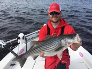 A nice Cape Fear River Striped Bass. (Courtesy: Capt. Jot Owens)