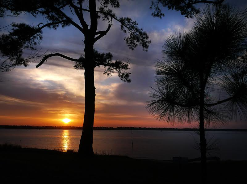 Carolina Beach State Park in New Hanover County. Photo courtesy NC State Parks