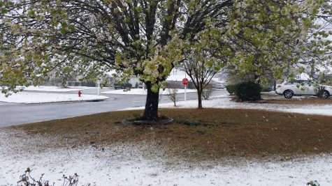 Wilmington saw its first snow fall in the month of March since 1983 on Sunday.