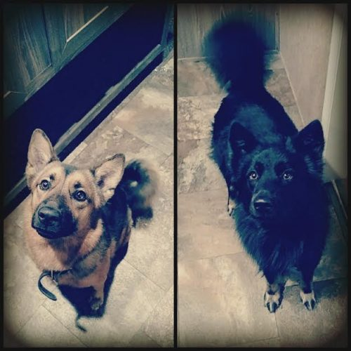 Rosie on the left, Thorne on the right,