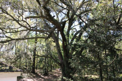 A large Live Oak tree in the back was just one of many features that attracted Laederach and Ramos to the Allens Lane property.