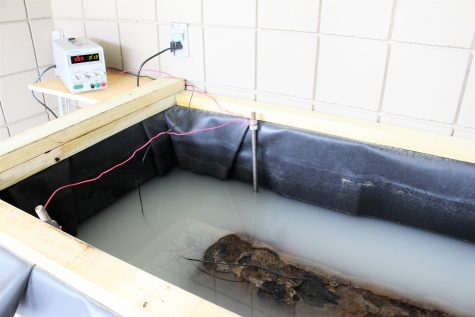 """The electrolysis set up for the cannon, before a cover was placed over the artifact. This """"salt magnet"""" will work to remove the salt from the cast-iron cannon."""