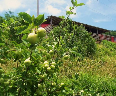 Want a dog-friendly anniversary excursion, or a day-trip as part of a longer weekend, try the Orchard at Altapass. (Port City Daily photo/COURTESY OF THE ORCHARD AT ALTAPASS)