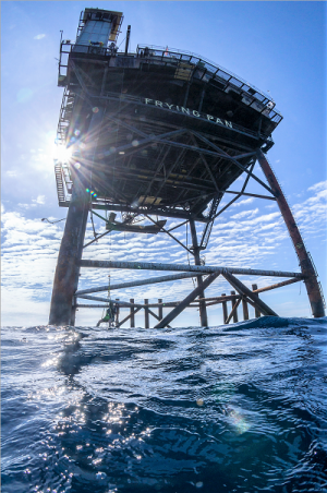 Meet some of the cape fear region s marine neighbors for Frying pan tower fishing
