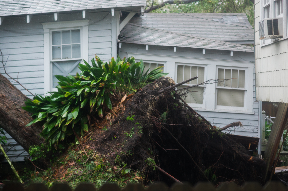 A uprooted tree in the backyard of a home in the Carolina Place neighborhood east of downtown Wilmington during the calm between the inner bands of Hurricane Florence Friday morning. (Port City Daily photo   Mark Darrough)
