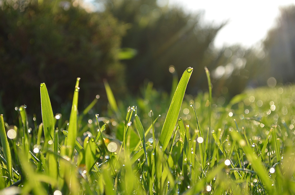 Widespread morning lawn irrigation is causing decreased water pressure in the Leland region. (Port City Daily/File photo)