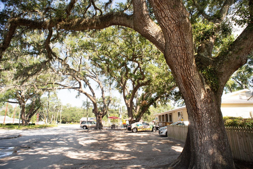 A new bill proposes to prohibit local governments from regulating the removal of trees without express statutory authority. (Port City Daily/File)