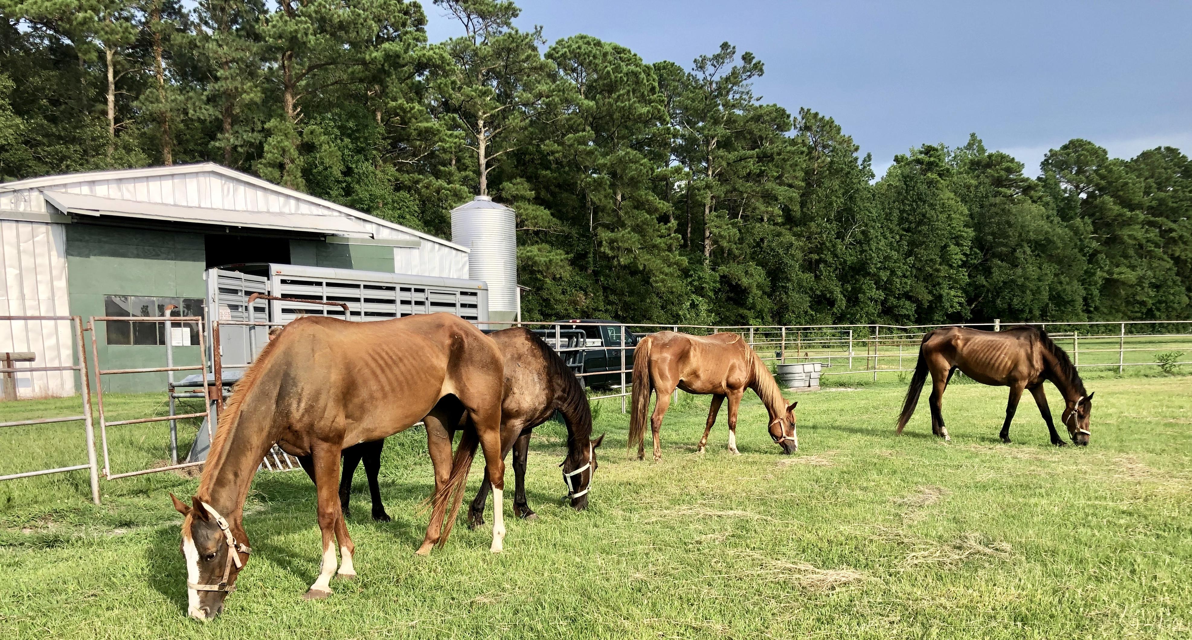 Horse rescue wilmington nc
