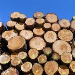 Methyl bromide is used to kill insects and pests present in logs before being exported to foreign markets. (Port City Daily/File photo)