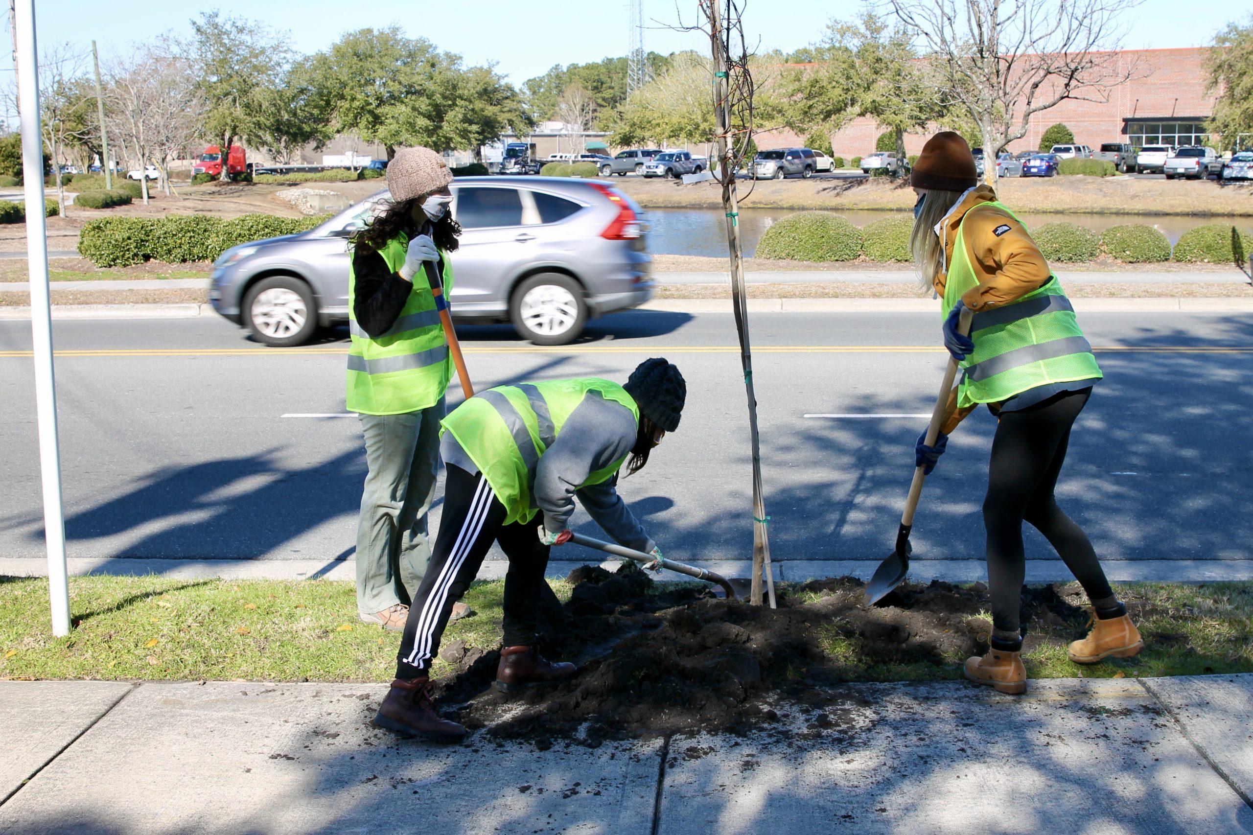 trees on racine drive (Port City Daily photo/Alexandria Sands)